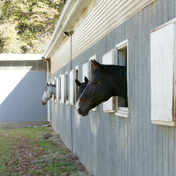 Konie wstajni