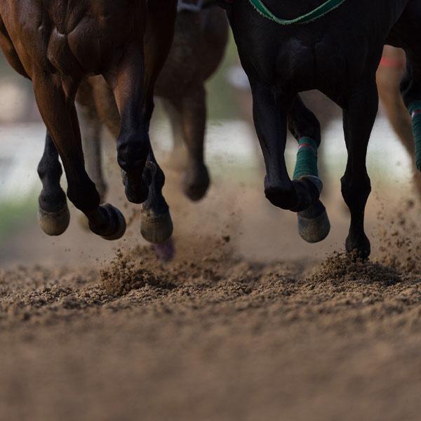 Galopujące stado koni